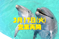 dolphincenter